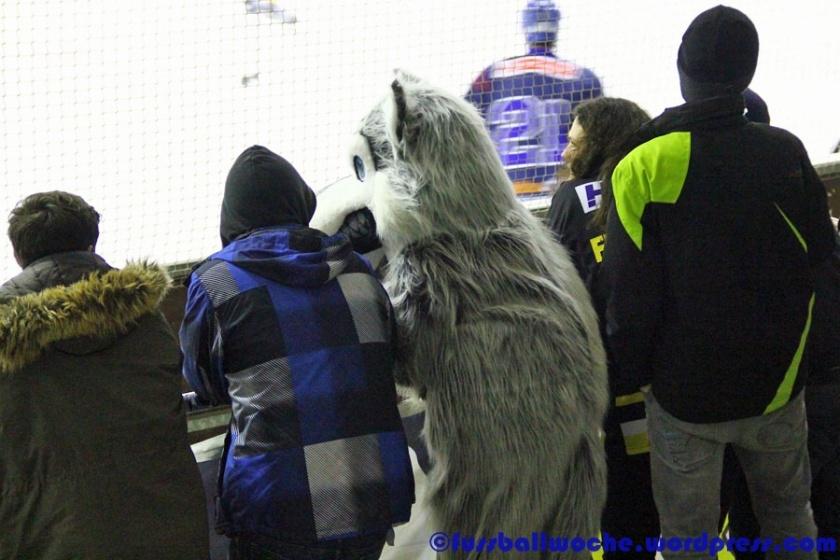 """""""Warum hast du so große Augen?..."""" (EHV Schönheide - Tölzer Löwen am 09.02.2016)."""